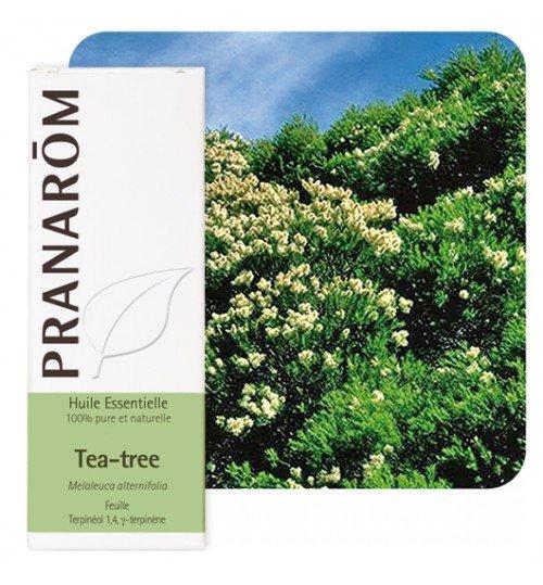 HE_Tea_Tree_pranarom-500x539