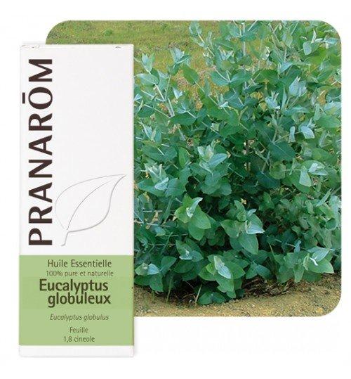 HE_eucalyptus_globuleux_pranarom-500x539
