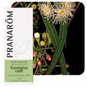 HE_eucalyptus_radie_pranarom-500x539