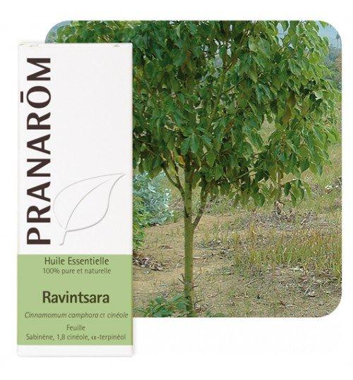 HE_ravintsara_pranarom-500x539